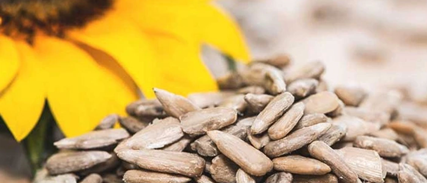 Six Super Foods to boost your immunity 6